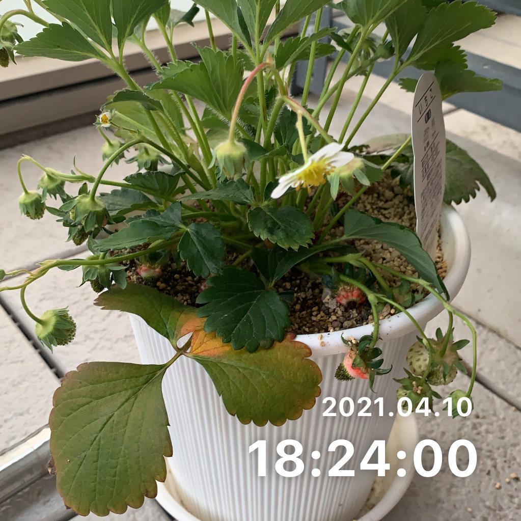 植物に水をやるのサムネイル画像