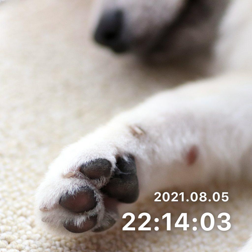 ペットのお世話のサムネイル画像