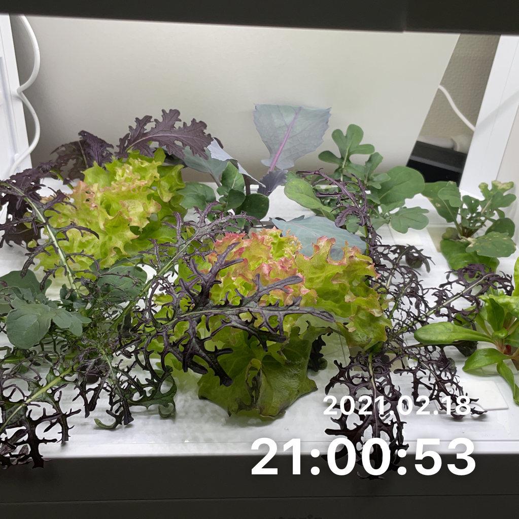 庭のお手入れをするのサムネイル画像